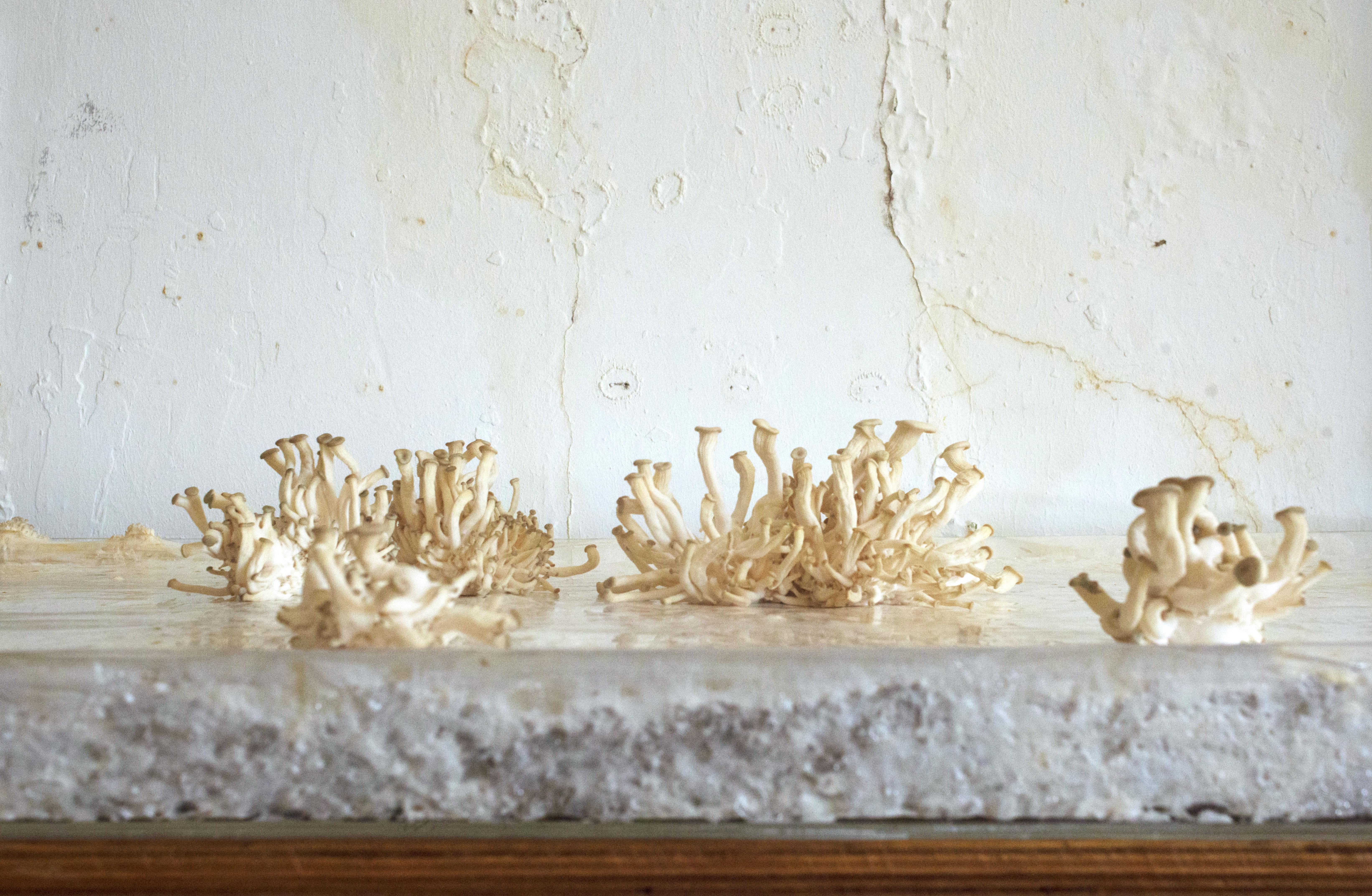 Organic Materials in Architecture: Inside Mycelium
